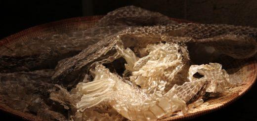 Чешуя, перья и пух, шерсть исследуются для определения вида, породы живого существа